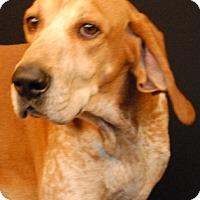 Adopt A Pet :: Elliot - Newland, NC
