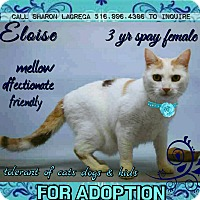 Adopt A Pet :: Eloise - Bedford Hills, NY