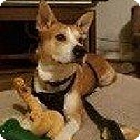 Adopt A Pet :: MANNY - Hampton, VA