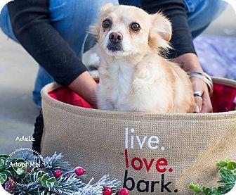 Pomeranian/Dachshund Mix Dog for adoption in Inland Empire, California - ADELE