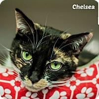 Adopt A Pet :: Chelsea - Oakville, ON