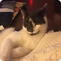 Adopt A Pet :: Swirl (Foster Care) - Blackwood, NJ