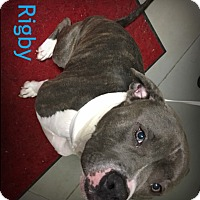 Adopt A Pet :: Rigby - Muskegon, MI