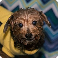 Adopt A Pet :: Jessie - Murphysboro, IL