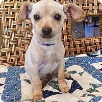 Adopt A Pet :: Chico - Santa Ana, CA