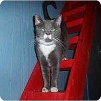Adopt A Pet :: Boomer - Hamburg, NY