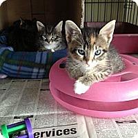 Adopt A Pet :: Lola & Sir Curl - Island Park, NY