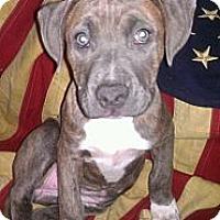 Adopt A Pet :: Karma - Roaring Spring, PA