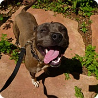 Adopt A Pet :: Holly - Sacramento, CA