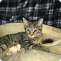 Adopt A Pet :: Mila - Speonk, NY