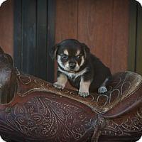 Adopt A Pet :: Becca Lou - Russellville, KY
