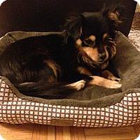 Adopt A Pet :: Freddie - San Francisco, CA