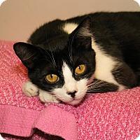 Adopt A Pet :: Weaber - Milford, MA