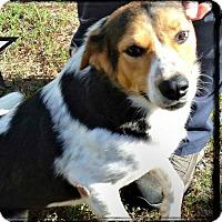 Adopt A Pet :: Doc - Benton, AR