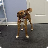 Adopt A Pet :: min - Jupiter, FL