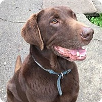 Adopt A Pet :: Kona - San Francisco, CA