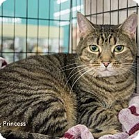 Adopt A Pet :: Princess - Merrifield, VA