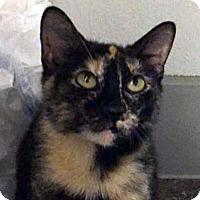 Adopt A Pet :: Omi - Austin, TX