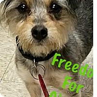 Adopt A Pet :: Cindy - Thousand Oaks, CA