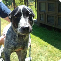 Adopt A Pet :: Holley - Kendall, NY