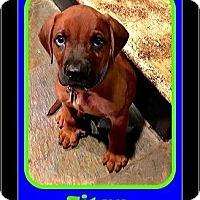 Adopt A Pet :: Titan - Milton, GA