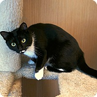 Adopt A Pet :: Sylvia - Kingston, WA