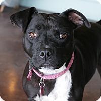 Adopt A Pet :: Jasmine - San Antonio, TX