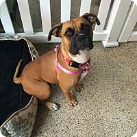 Adopt A Pet :: Helena - Thousand Oaks, CA