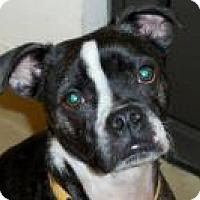 Adopt A Pet :: Dozer - Salem, WV
