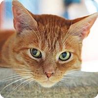 Adopt A Pet :: Ernie - Alameda, CA