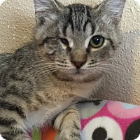 Adopt A Pet :: Cy - Meridian, ID