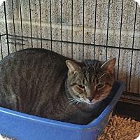 Adopt A Pet :: Billy - Waldorf, MD