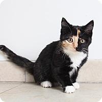 Adopt A Pet :: Astrid C160368: PENDING ADOPTION - Edina, MN