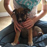 Adopt A Pet :: Skakira - DeForest, WI