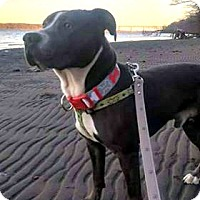 Adopt A Pet :: Smoke - Maybrook, NY