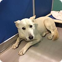 Adopt A Pet :: ASPEN - Bryan, TX
