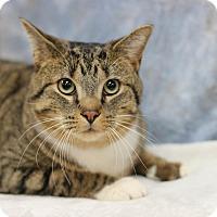 Adopt A Pet :: Tom Cruise - STRAY - Midland, MI