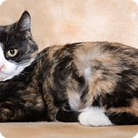 Adopt A Pet :: Leia - Salt Lake City, UT