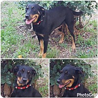 Adopt A Pet :: Mandy Sparkledust - Naples, FL