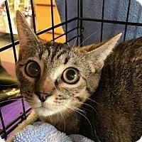 Adopt A Pet :: Ophelia 08-4049 - Fremont, CA