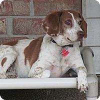 Adopt A Pet :: Livy - Prairieville, LA