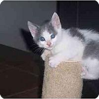 Adopt A Pet :: Mickey - Irvine, CA