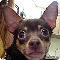 Adopt A Pet :: Radish - Lancaster, OH