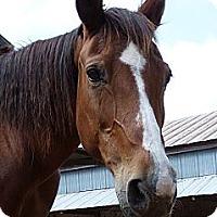 Adopt A Pet :: Birdie - Lakebay, WA