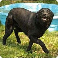 Adopt A Pet :: Dixie - Staunton, VA