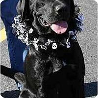 Adopt A Pet :: Shawnee - Cumming, GA