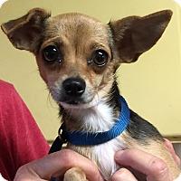 Adopt A Pet :: Babe - Orlando, FL