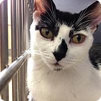 Adopt A Pet :: Poptart - East Brunswick, NJ