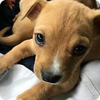 Adopt A Pet :: Darryl Dixon - Available Soon! - Detroit, MI