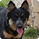 Adopt A Pet :: Sierra Please Pick Me!!
